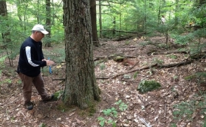Dr. David Orwig coring a northern red oak in southwestern NH that dates to the 1780s. This population of oak gave more evidence supporting earlier observations that some tree-killing event stimulated tree recruitment around the Northeast in the late 1700s.