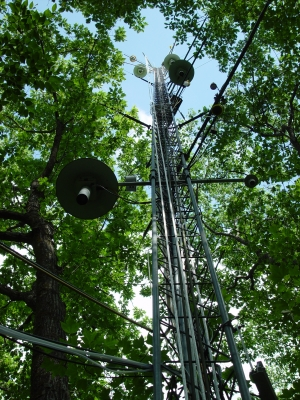 The oldest forest eddy-flux tower in the world stands in a hardwood forest measuring atmospheric carbon dioxide. Photo by David Foster.