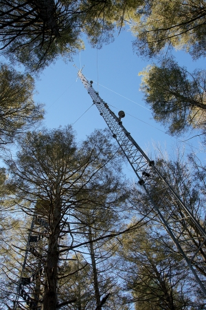 Two eddy-flux research towers stand against the sky among hemlock trees with thinning canopies, measuring atmospheric carbon dioxide at Harvard Forest. Photo by David Foster.