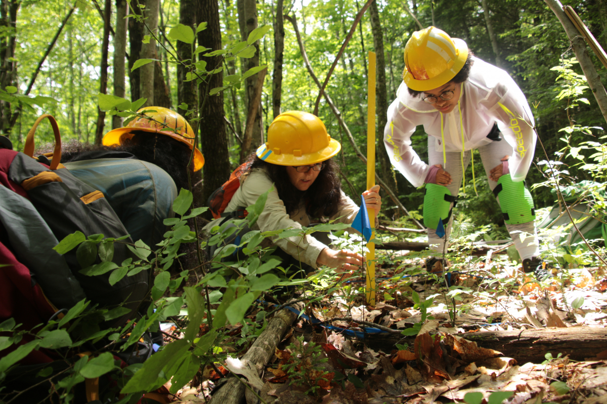 two Summer Research Program students and their mentor measure plants in the forest