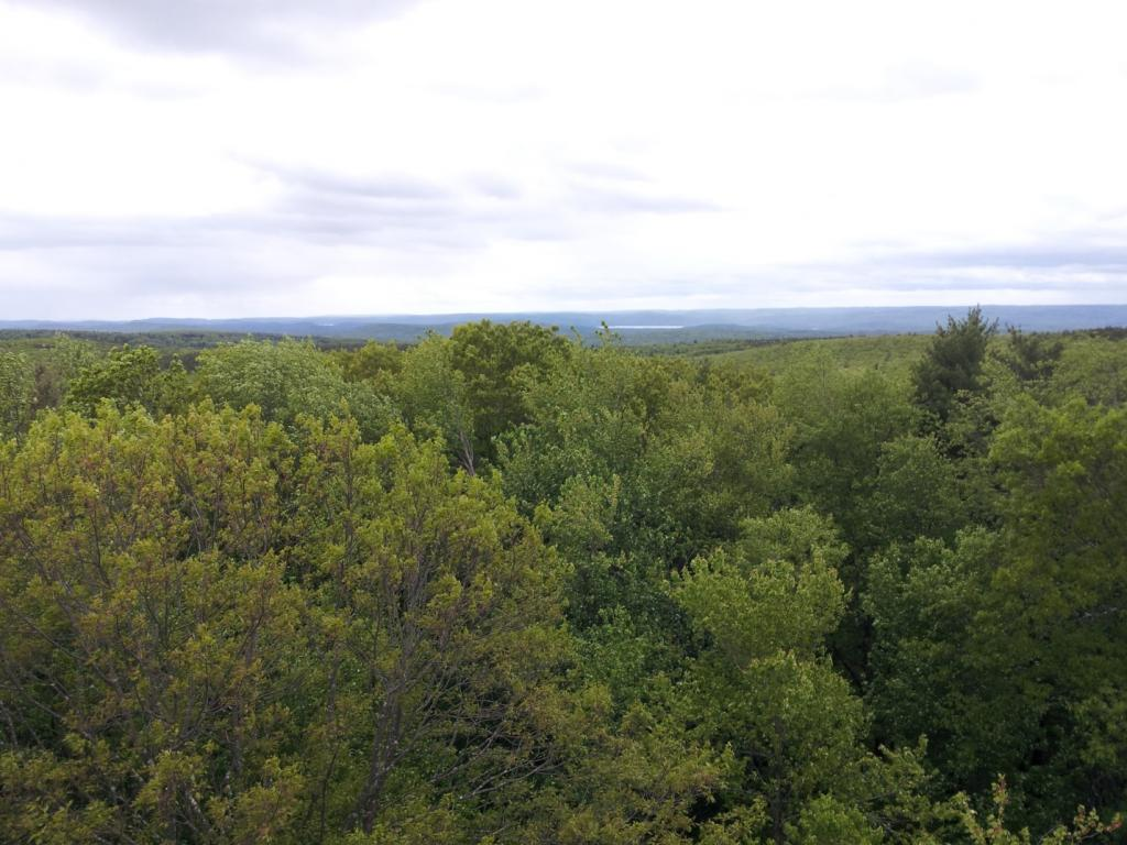 [A view of the Harvard Forest from the fire tower Sunday morning.]