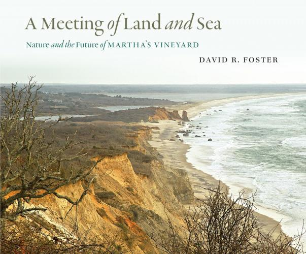 A Meeting of Land and Sea cover