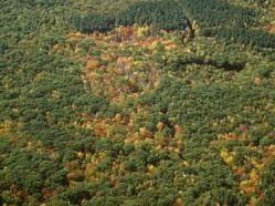 Harvard Forest Aerial Photo 1985