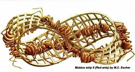 Mobius Strip (Red Ants)