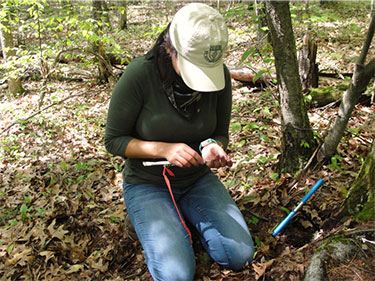 [Collecting samples of tree roots. Photo by Jill Fusco]