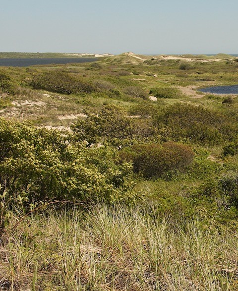 Coastal openlands at Red Gate Farm, Martha's Vineyard.  Photo by David Foster.