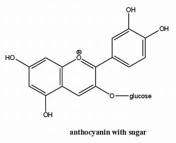 Anthocyanin Formel