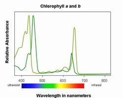 Chlorophyll-Formel