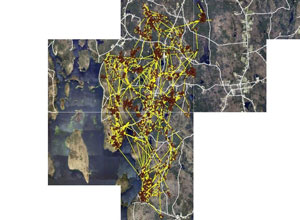 [GPS locations of an individual moose in the Northeast Quabbin landscape]