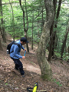 [Using an increment borer to core the 234 year-old white oak at the Mohawk Trail State Forest that has only very recently reached the canopy. Photo by Neil Pederson]