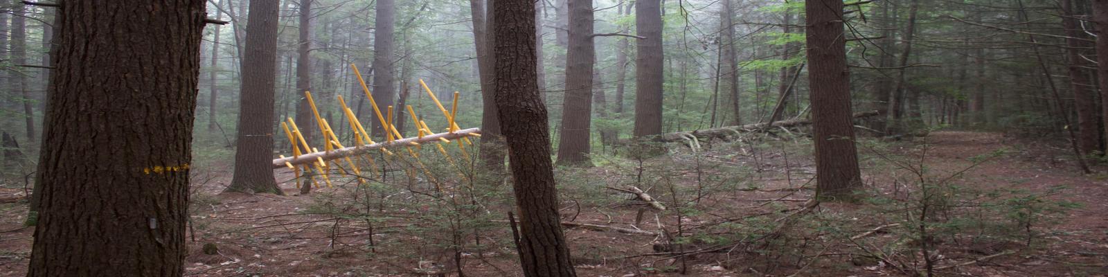 David Buckley Borden Exchange Tree