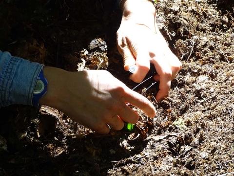 Picking Ants to Sample
