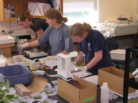 Summer Research Program Works With Mentors