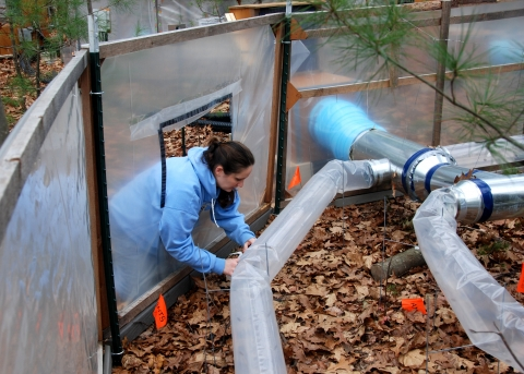 """Post-Doc Collects Data In The """"Warm Ants"""" Experiment"""