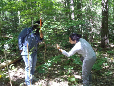 Summer Research Students Inspect A Shrub