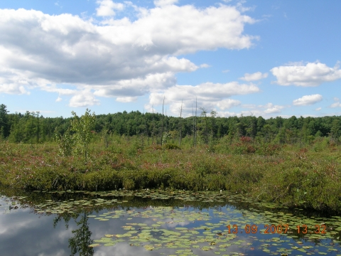 Tom Swamp Research Tract