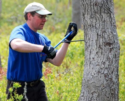Research Assistant Cores Tree as Part of Oak Decline Study