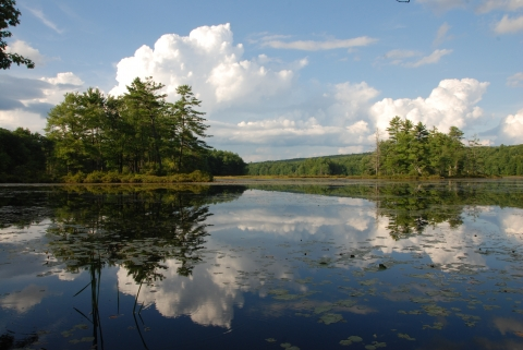 View of Harvard Pond