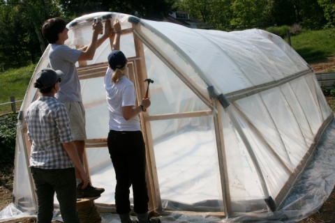 Ragweed greenhouse