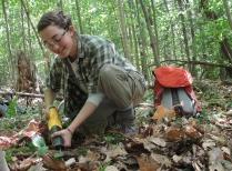 Summer Student cuts tree