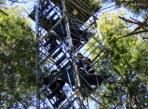 Harvard Students Climb Canopy Access Tower