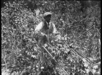 R.T. Fisher in Mixed Pine and Spruce Plantation