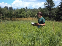 Summer Research Program Student Locates Off-Site Ragweed