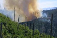 A fire burns on a hill among dense vegetation.