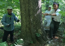 Dr. Zhen-ju Chen, Dr. David Orwig, and student Mel Paduani core a large northern red oak tree in an old-growth forest