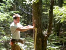 Tree measuring at mega-plot