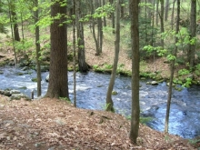 A river flowing through the woods