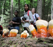 Summer Research Program students stand in the woods looking at a row of orange mushrooms on a log