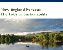 NEFF Path to Sustainability report