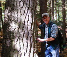 David Kittredge rests both hands against the bark of a large white pine tree in Pisgah State Forest