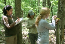 Senior ecologist Audrey Barker Plotkin works with student researchers Collette Yee and Kate Eisen to measure trees in a long-term Harvard Forest study plot. Photo by Moshe Roberts.