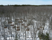 Harvard Forest soil warming research plots
