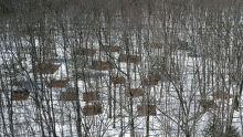 Harvard Forest soil warming plots.