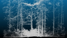 Lidar scan of a forest.