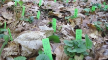 Green markers that are numbered and placed sticking out of the ground.