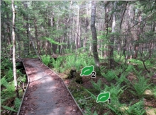 screenshot of virtual French Road trail, showing a wooden boardwalk through ferns and trees