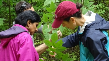3 Schoolyard Ecology teachers inspect the leaves of an ash tree in summer.