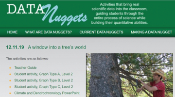 screenshot of Data Nugget website showing title (A window into a tree's world) and image of scientist Neil Pederson extracting a tree-ring core from the trunk of an evergreen tree