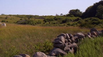 Openland and stone wall