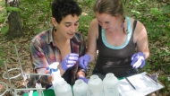 Undergraduate students working in the field