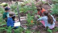 Hemlock Citizen Scientist project
