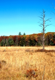 Wetland with trees in the background showing fall foliage