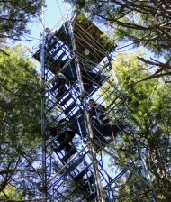 Tower at Harvard Forest