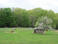 One of the cow pastures at Harvard Forest