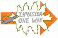 Gypsy Moth Invasion