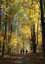 People walking down a path surrounded by trees in the fall.